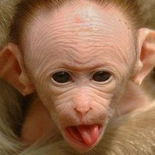 Postnatal Zika Infection Causes Brain Damage in Infant Macaques