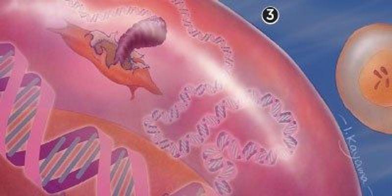 Chromosomal Instability Drives Cancer Metastasis
