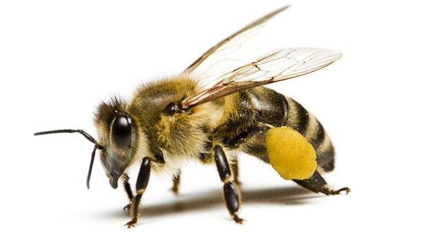 bees molecular responses to neonicotinoids determined the