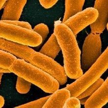 Many Non-Antibiotic Drugs Affect Gut Bacteria