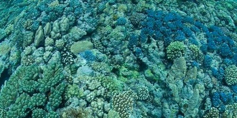 Image of the Day: Coral on Acid
