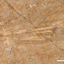 Image of the Day: Pterosaur Fossils