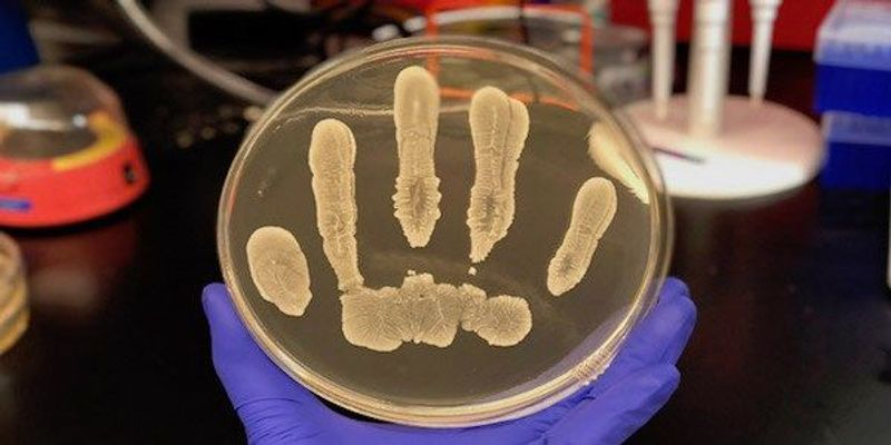 Cancer-Fighting Chemical Found in Human Skin Bacteria