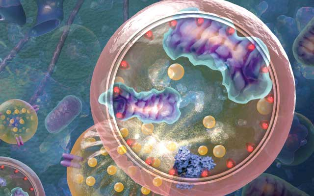 Eat Yourself to Live: Autophagy's Role in Health and Disease