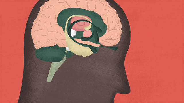 Are the Brains of Transgender People Different from Those of ...