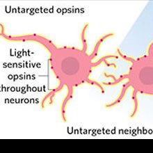 Infographic: Increasing Optogenetic Precision