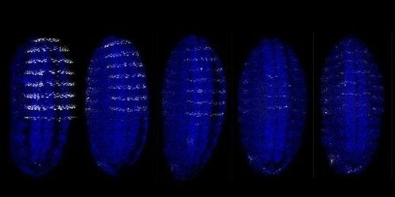 Image of the Day: Gene Expression