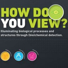 How Do You View? Illuminating Biological Processes and Structures Through (Bio)chemical Detection