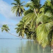 Paradise Regained: How the Palmyra Atoll Got Rid of Invasive Mosquitoes