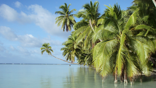 Paradise Regained How The Palmyra Atoll Got Rid Of Invasive