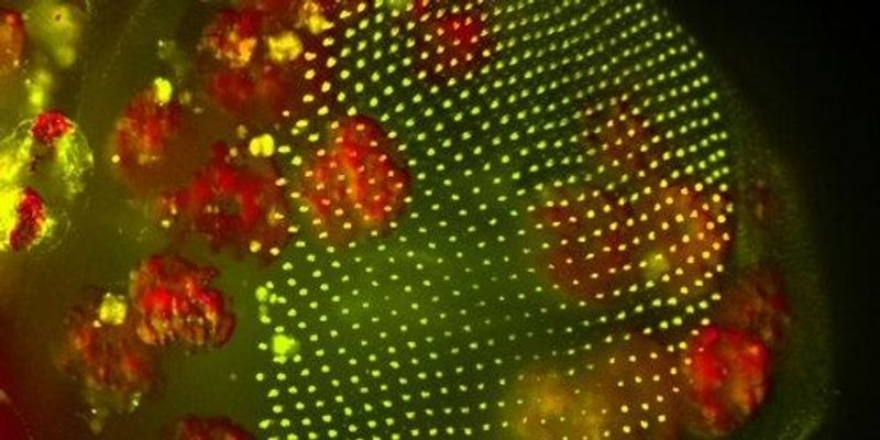 Fat Cells Travel to Heal Wounds in Flies