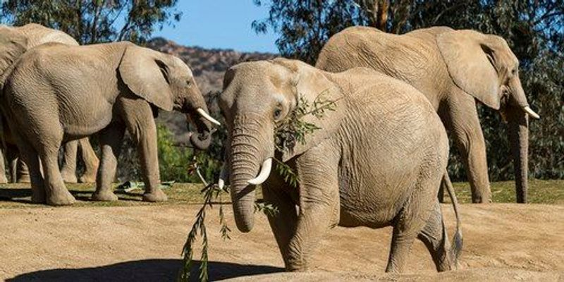 Extinct and Living Elephants' Genomic History Sequenced