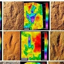 Image of the Day: Dino Tracks
