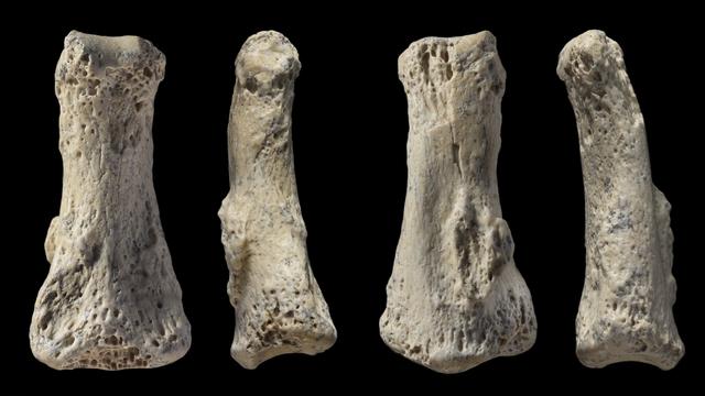 Hvad er dating fra fossiler
