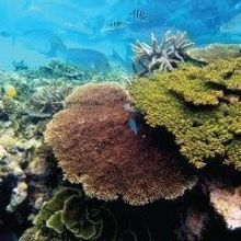 Researchers Cryopreserve Coral Sperm