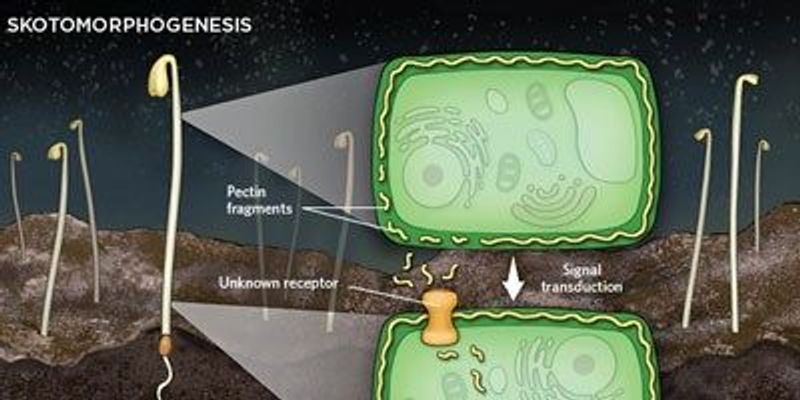 Plant Cell Walls Can Control Growth in the Dark