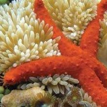 Sea Anemone Toxin Could Treat Autoimmunity