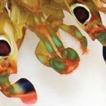 Insects' Neural Learning and Memory Center Discovered in Crustaceans