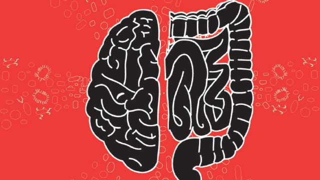 When Gut Bacteria Change Brain Function >> How Microbes May Influence Our Behavior The Scientist