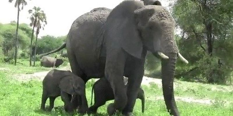 Image of the Day: Elephant Twins