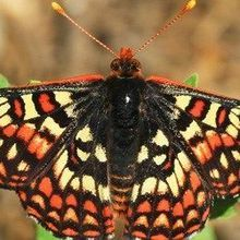 Climate Change Could Shift Timing of Species' Interactions