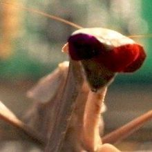 Image of the Day: Mantis Glasses