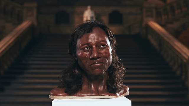 reconstruction of Cheddar Man's head
