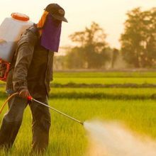 How Toxic is the World's Most Popular Herbicide Roundup?