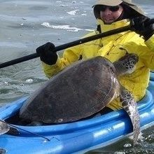 Image of the Day: Sea Turtle Rescue