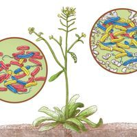 Infographic: Plants' Microbial Communities