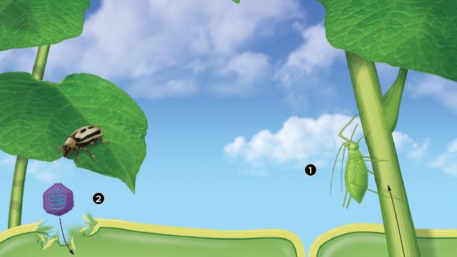 病毒如何攻击植物