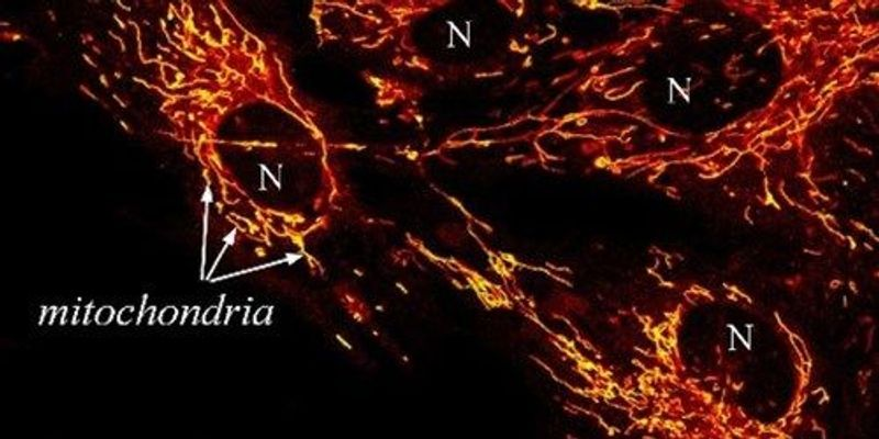 Image of the Day: Red-Hot Mitochondria