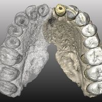 Jawbone Fossil Suggests Humans Left Africa Earlier than Previously Believed