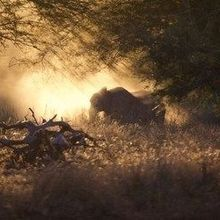 Image of the Day: Elephants at Sunset