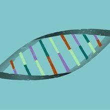 Immunity May Make CRISPR-Based Therapies Ineffective