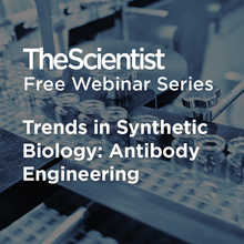 Trends in Synthetic Biology: Antibody Engineering
