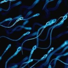 Hormonal Male Contraceptive to Enter Clinical Trial