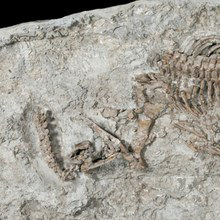 Image of the Day: Sea Dinosaur