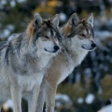 Idaho Officials Challenge Court Order to Destroy Illegally Collected Wildlife Data