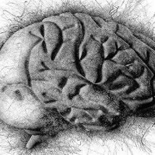 Thousands of Mutations Accumulate in the Human Brain Over a Lifetime