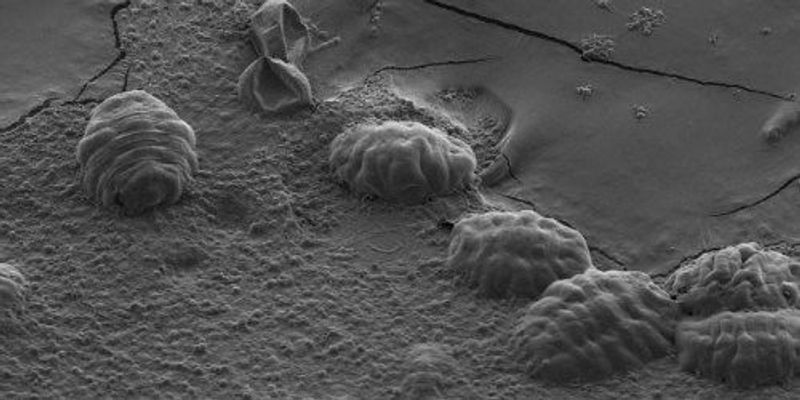 New Insights into Tardigrades' Ability to Withstand Drying Out