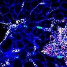 Image of the Day: Tissue Feast