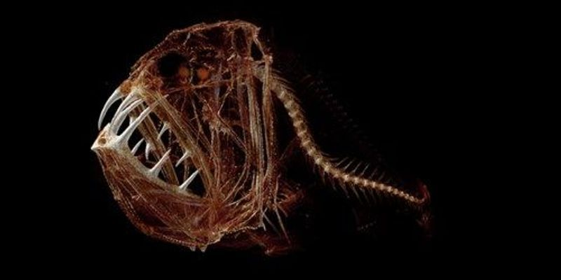 Image of the Day: Deep Sea Fangs