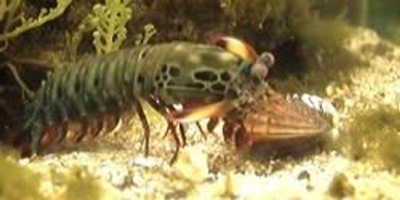 Kung Fu Shrimp