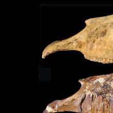 Image of the Day: Ice Age Horse