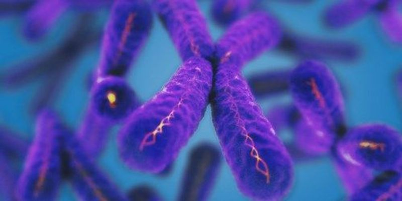 Telomere Length and Childhood Stress Don't Always Correlate