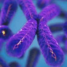 Telomere Length and Childhood Stress Don't Always Correlate | The