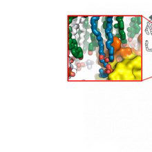 Image of the Day: Membrane Fever