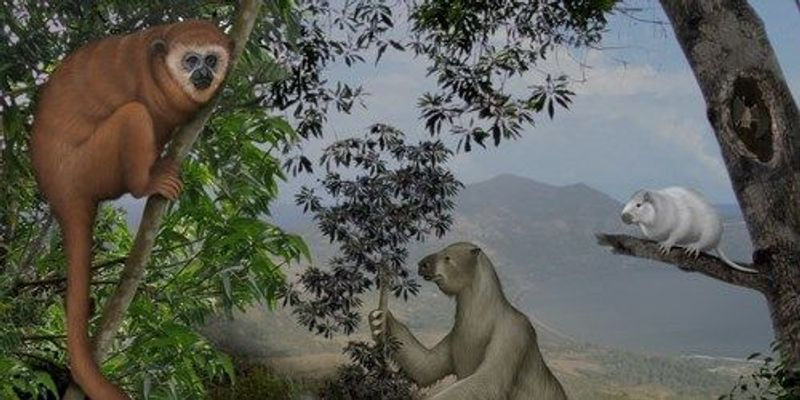Image of the Day: The Last Sloth