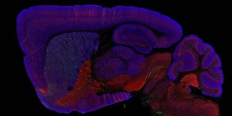 LabQuiz: Neuroscience Challenge